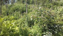 Logged hillside
