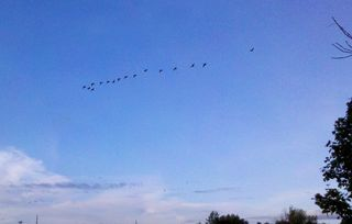 Geese Two