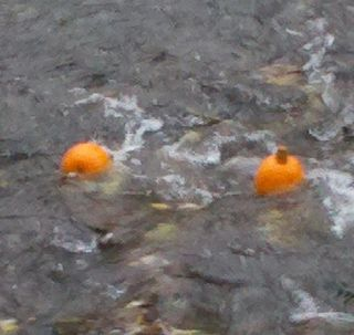 Pumpkins in River