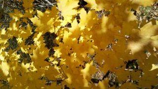 November Leaves 026