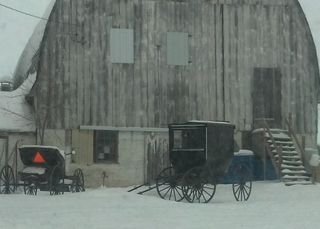 Amish Farm 2 Crop