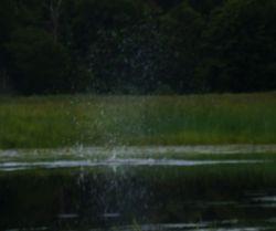 Beaver Splash
