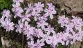 Flowers 019 Crop