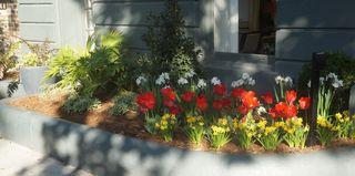 Savannah Flowers