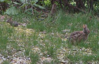 Bunny and bunnieCrop