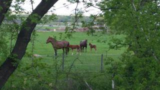 Baby Horses 001