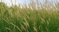 Best Grass1