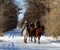 Winter horses 2Crop2