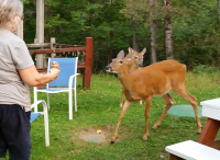 Julie and Deer