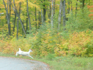 White Deer One