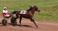 Harness Racing1