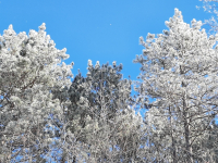 Frost in the Forest
